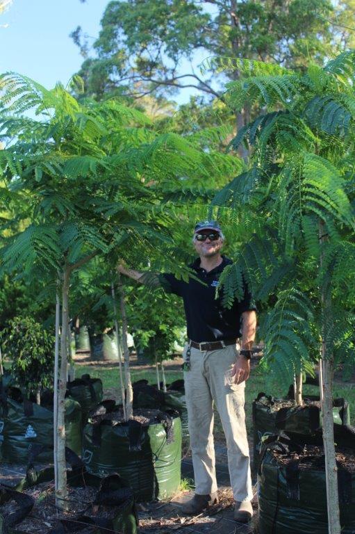 Trees | Kiamba Valley Nursery